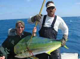 Dolphin Fishing Photo Gallery: Big dolphin can be caught all year long, but the peak season is April through October. Islamorada Fishing Charters Florida Keys