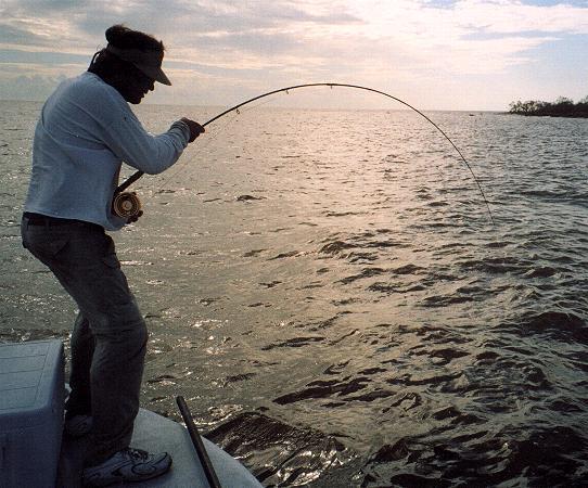 Shark fishing and fly fishing sport fishing islamorada for Rising fly fishing