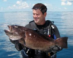 Groupers are the toughest to slip up on for a shot. They hide amongst the rocks, and spook quickly not allowing you to get close. Spear Fishing Islamorada Photo Gallery - Islamorada Fishing Charters