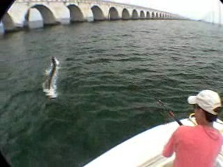 Hang on to that tarpon - Click to watch!